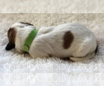 Image preview for Ad Listing. Nickname: Puppy #7