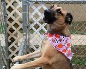 McGruff - German Shepherd Dog Dog For Adoption