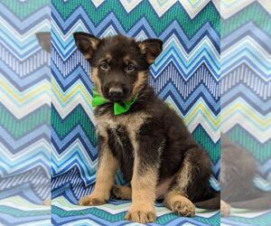 German Shepherd Dog Dog for Adoption in NEW PROVIDENCE, Pennsylvania USA