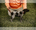 Small #6 German Shorthaired Pointer