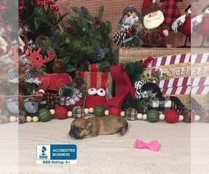 Morkie-Unknown Mix Puppy for sale in WINNSBORO, LA, USA