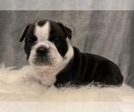 Small #5 Bulldog