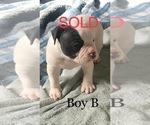 Small #9 American Bulldog