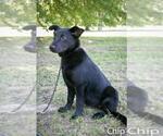 Small #72 Australian Shepherd
