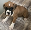 Small #7 Boxer