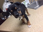 Gulf Coast Mississippi Rescue 12 Weeks Girl