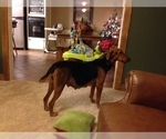 Small #5 Airedale Terrier