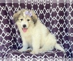 Small #10 Great Pyrenees