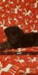 Puppy 4 German Shepherd Dog-Goldendoodle Mix