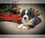 Image preview for Ad Listing. Nickname: Christmas puppi