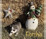 Image preview for Ad Listing. Nickname: Porchia
