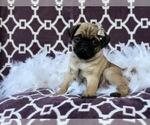 Small #13 Pug