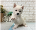 Small Photo #6 Shiba Inu Puppy For Sale in BEVERLY HILLS, CA, USA