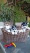 Siberian Husky Puppy For Sale in FRESNO, CA, USA