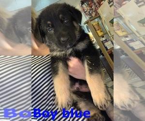 Puppies for Sale near Todd, North Carolina, USA, Page 1 (10 per page