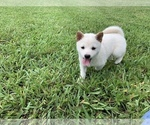 Image preview for Ad Listing. Nickname: Puppy