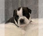 Small #10 Bulldog