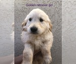 Small #3 Golden Retriever