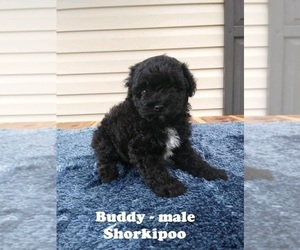 Shih-Poo-Yorkie-Poo Mix Puppy for sale in CLARKRANGE, TN, USA