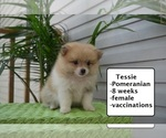 Image preview for Ad Listing. Nickname: Tessie