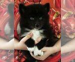 Small #2 Huskimo