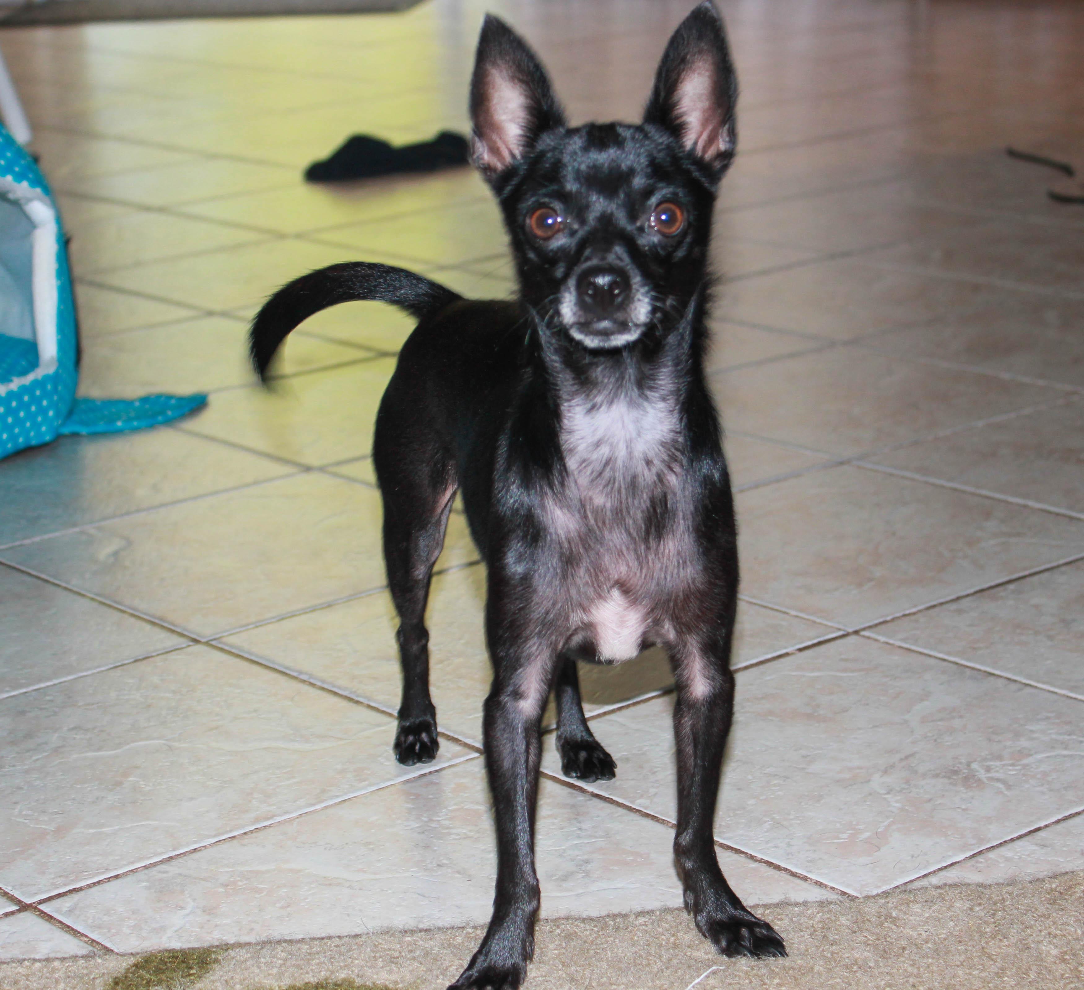 Rescue Dogs West Palm Beach Fl
