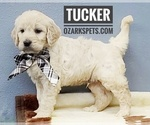 Image preview for Ad Listing. Nickname: Tucker