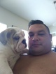 Bulldog Puppy For Sale in ORLANDO, FL,