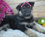 Small #3 German Shepherd Dog