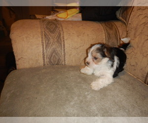 Puppies For Sale Near Ripley West Virginia Usa Page 1 10 Per