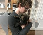 Small #2 Bullmastiff