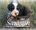 Small #4 Bernese Mountain Dog