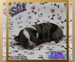 Image preview for Ad Listing. Nickname: Silk