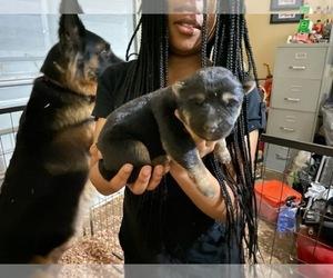 German Shepherd Dog Puppy for Sale in ATL, Georgia USA