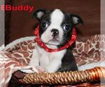 Image preview for Ad Listing. Nickname: Buddy