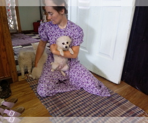 American Eskimo Dog Puppy for sale in CARTHAGE, NY, USA