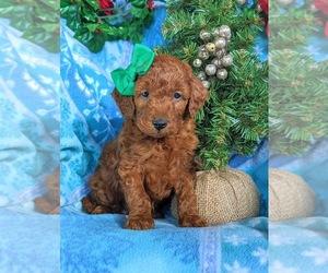 Pomsky Dog for Adoption in LEOLA, Pennsylvania USA