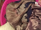 Weimaraner Puppy For Sale in CONCORD, NC