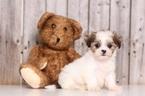 Marigold Female Teddy Bear