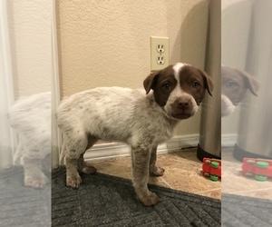 Puppies For Sale Near Bailey Colorado Usa Page 1 10 Per