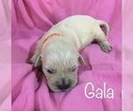 Image preview for Ad Listing. Nickname: Gala