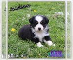Image preview for Ad Listing. Nickname: Madison