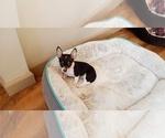 Puppy 2 Rat-Cha