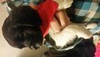 Brittany Puppy For Sale in POMONA, MO, USA