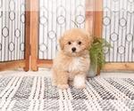 Small #2 Poochon