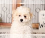Small #2 Poochon