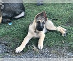 Small #6 German Shepherd Dog