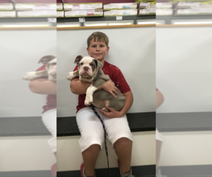 English Bulldog Puppy for sale in DALTON, GA, USA