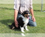 Small #2 Bernese Mountain Dog-Collie Mix