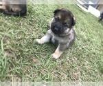 Small #10 German Shepherd Dog